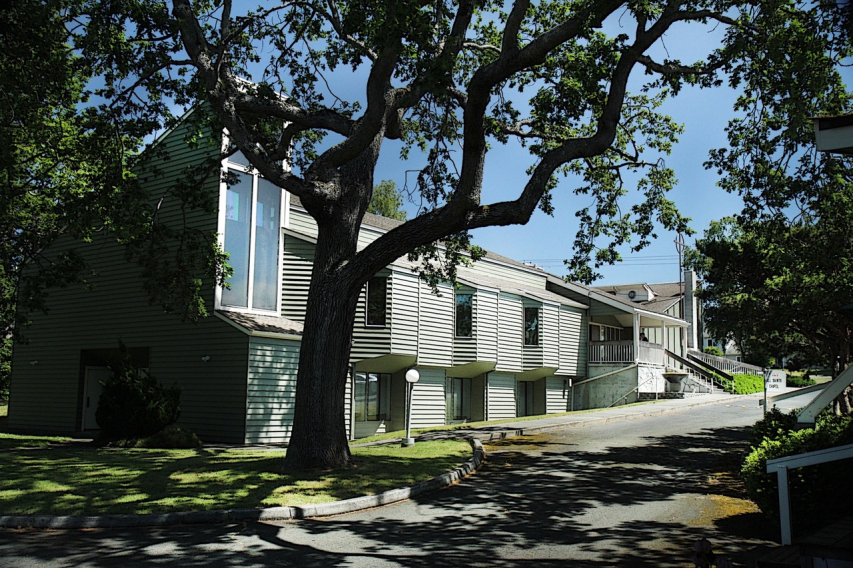 Garry Oaks surround our main building